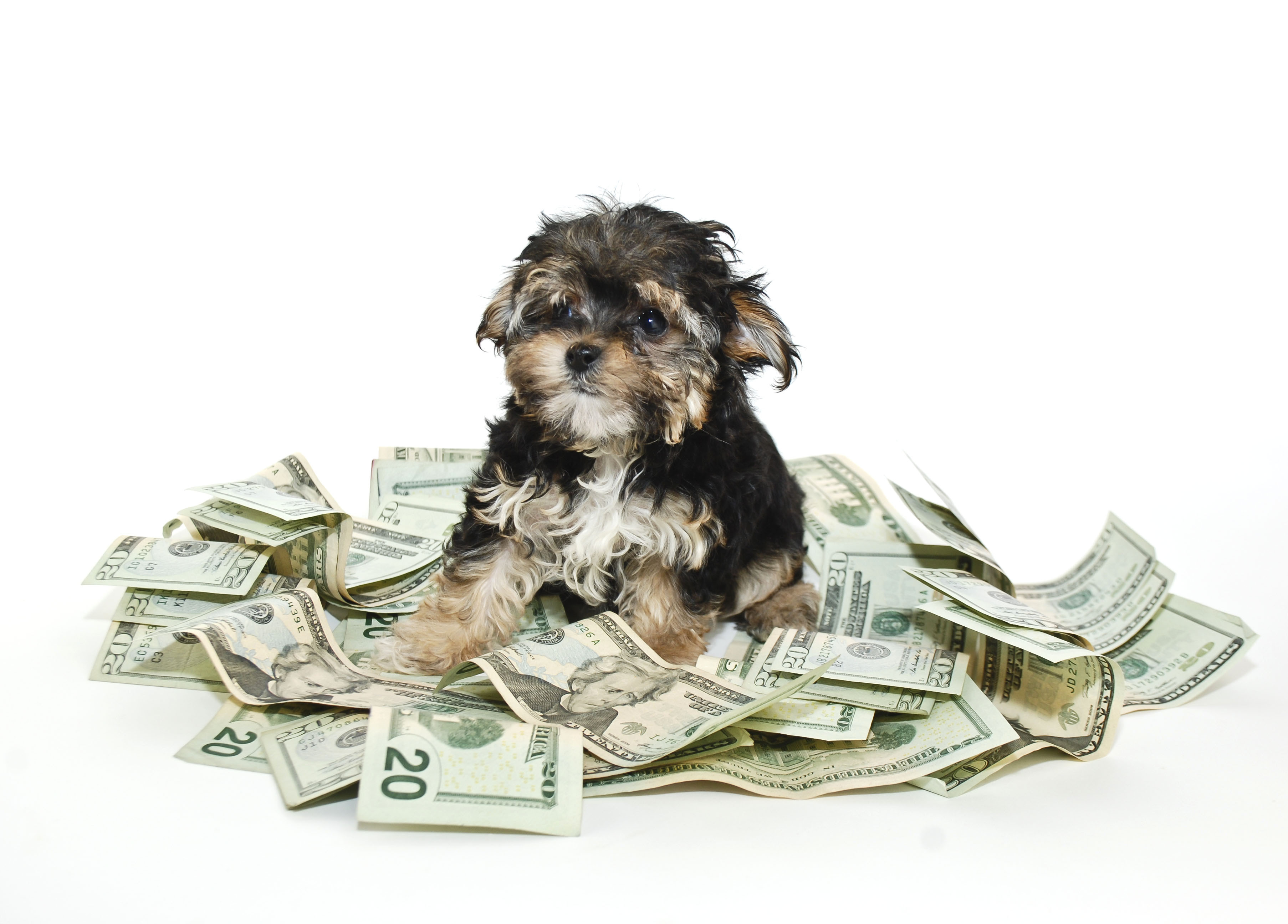 6 Things to Know About Insuring Your Pets